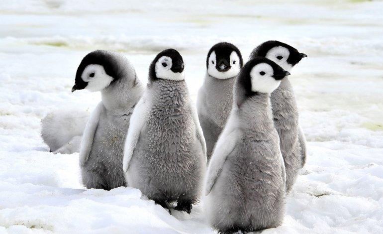 giornata mondiale pinguino