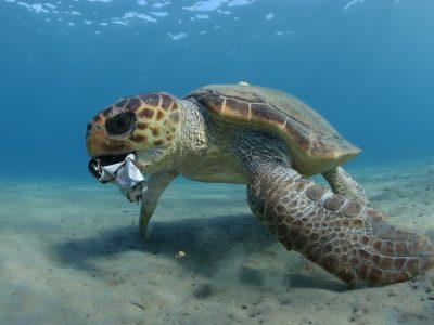 Giornata Mondiale degli Oceani 2021: l'importanza della pesca sostenibile