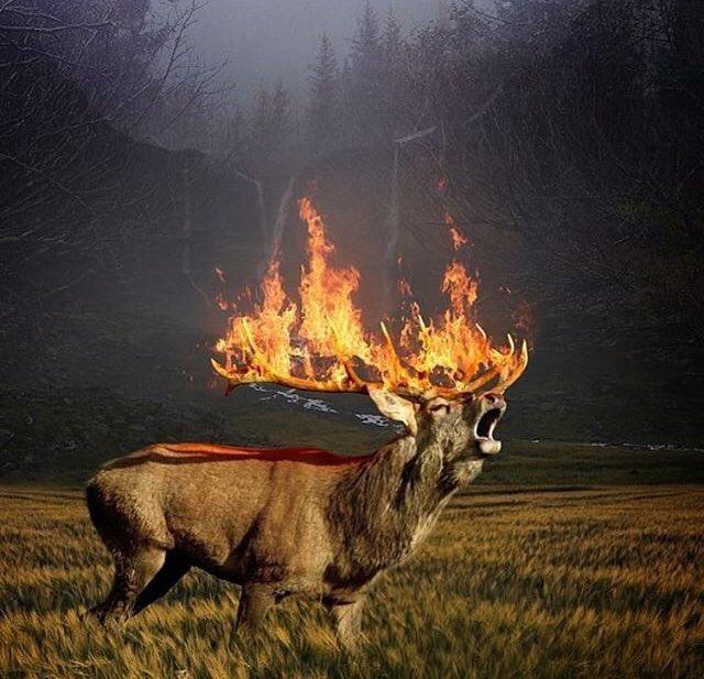 siberia in fiamme