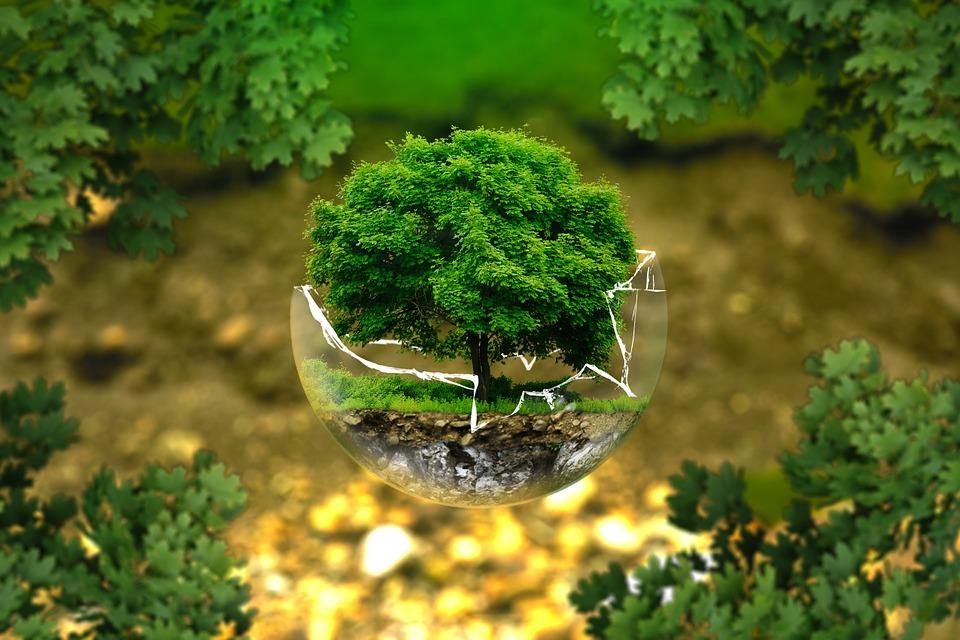 natura, inquinamento, manifesto di cernobbio