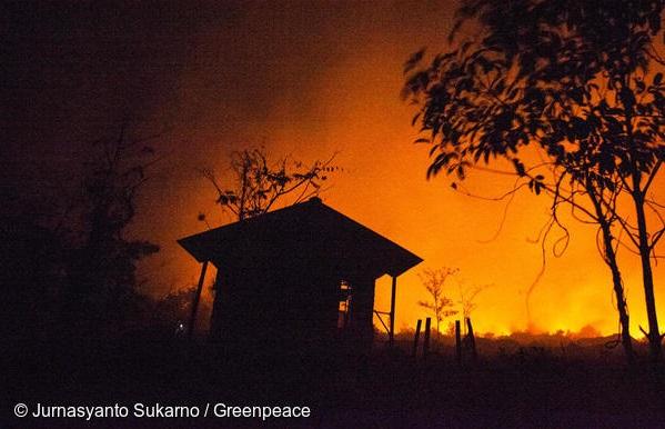 indonesia brucia, greenpeace