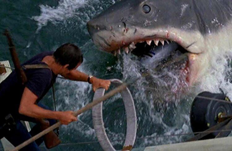 uomo ucciso squalo