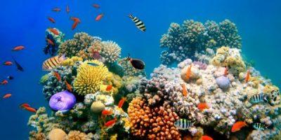 Uno spettacolo unico al mondo il processo di ripristino della barriera corallina