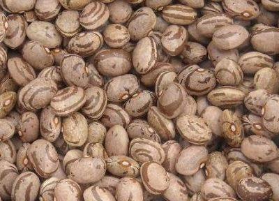 Dalla Calabria: il fagiolo di Cortale diventa presidio Flow Food