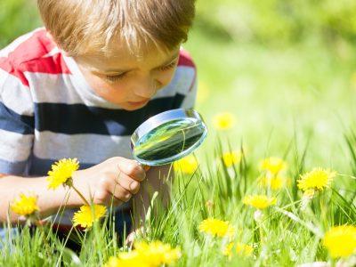 Scuola, educazione ambientale: la fondazione Sorella Natura al servizio della comunità