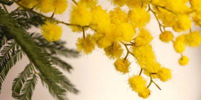 Festa della donna, 8 marzo: ma serve una data per 'discolparsi'?