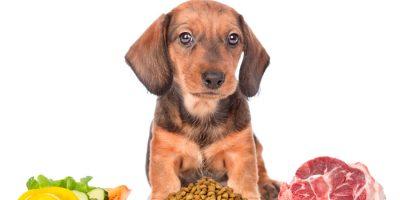Allergie e intolleranze alimentari nel cane, possibili cause e rimedi