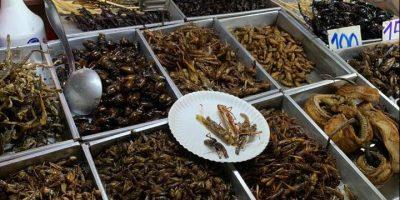 Ok dell'Ue alla vendita del primo insetto da mangiare: la tarma della farina