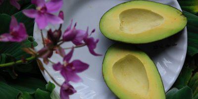 Oggi si festeggia l'Avocado day: è boom di vendite in Italia