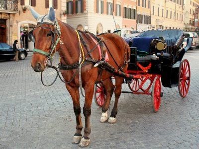 Cavallo collassato a Palermo: gli animalisti chiedono accertamento