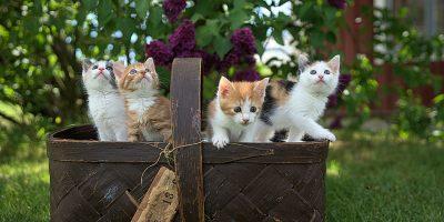 Malattie del gatto: leucemia felina, cosa c'è da sapere