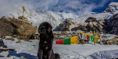 Una vacanza in montagna col cane: ottima scelta!