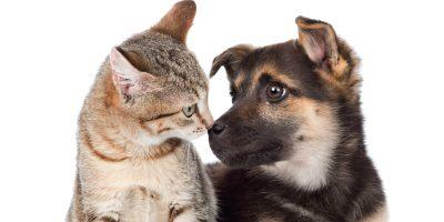 Unghie del cane e del gatto, quando e come tagliarle