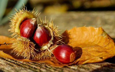 Castagne: il frutto simbolo dell'autunno